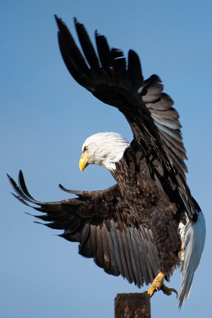Eagle as a message of self-trust and courage